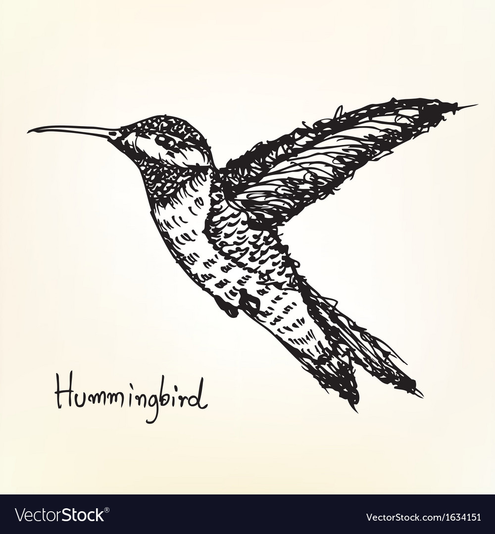 Hummingbird sketch vector | Price: 1 Credit (USD $1)