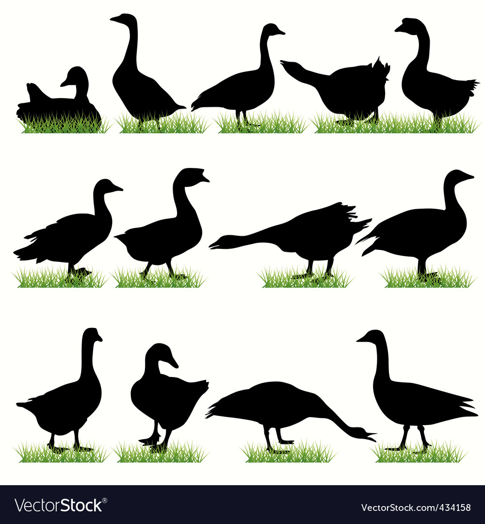 Goose vector | Price: 1 Credit (USD $1)