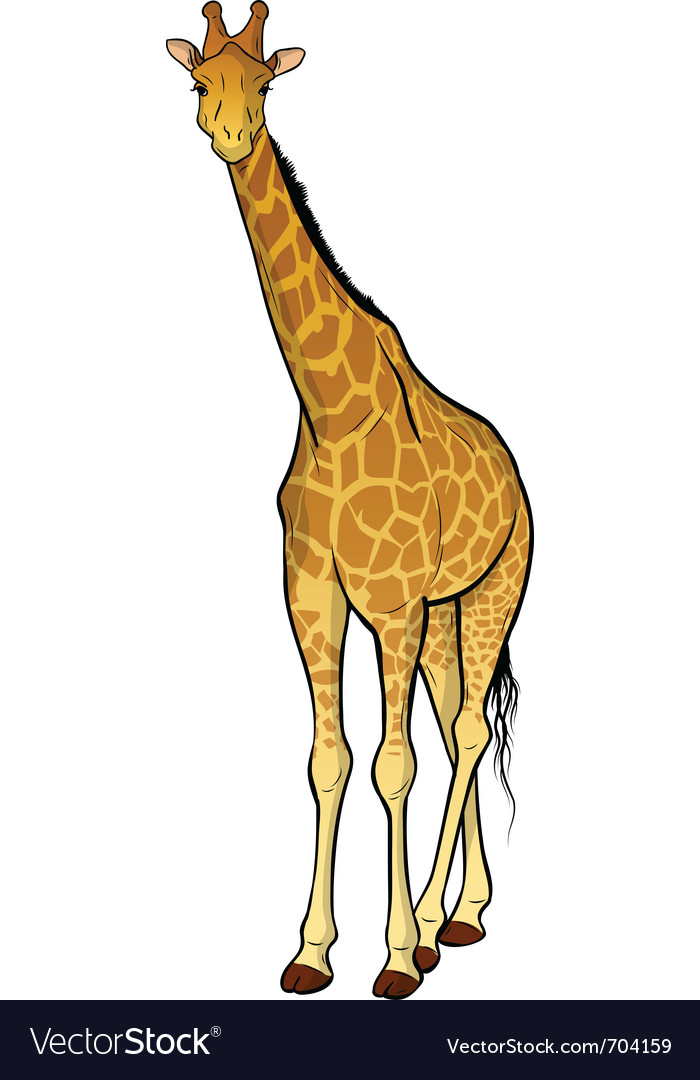 Giraffe isolated on the wite vector | Price: 3 Credit (USD $3)