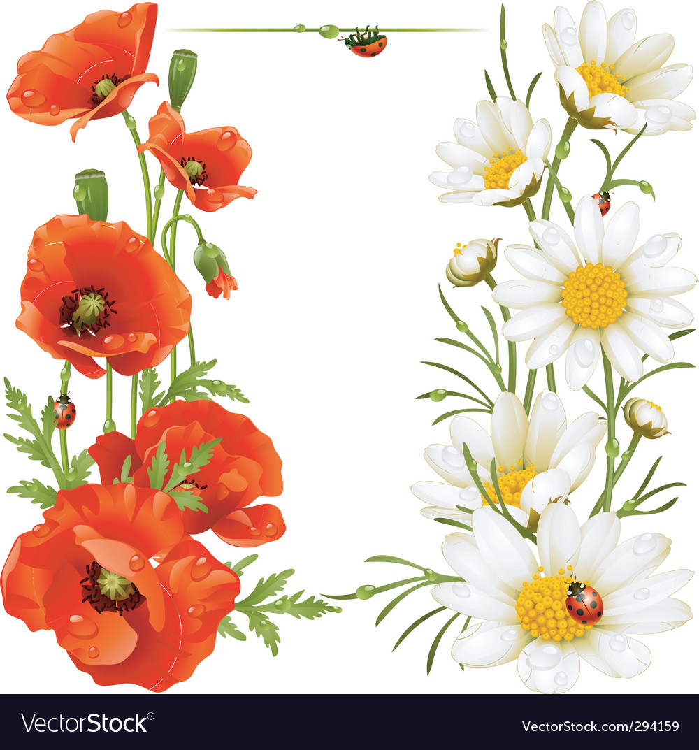 Poppy and chamomile vector | Price: 1 Credit (USD $1)