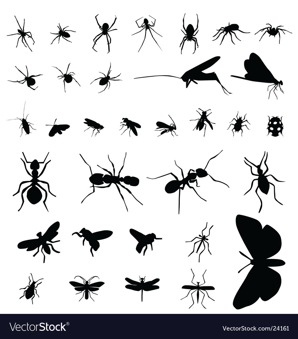 Insect silhouettes vector | Price:  Credit (USD $)