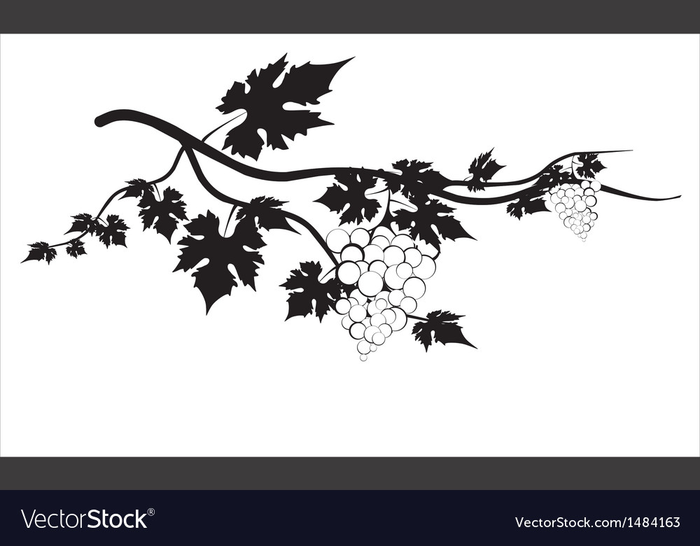 Grape isolated on white background vector | Price: 1 Credit (USD $1)