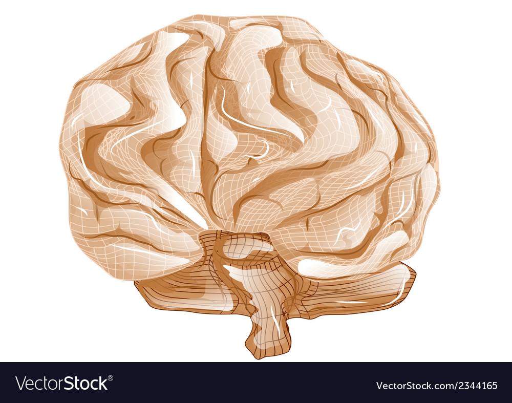 Brain vector | Price: 1 Credit (USD $1)