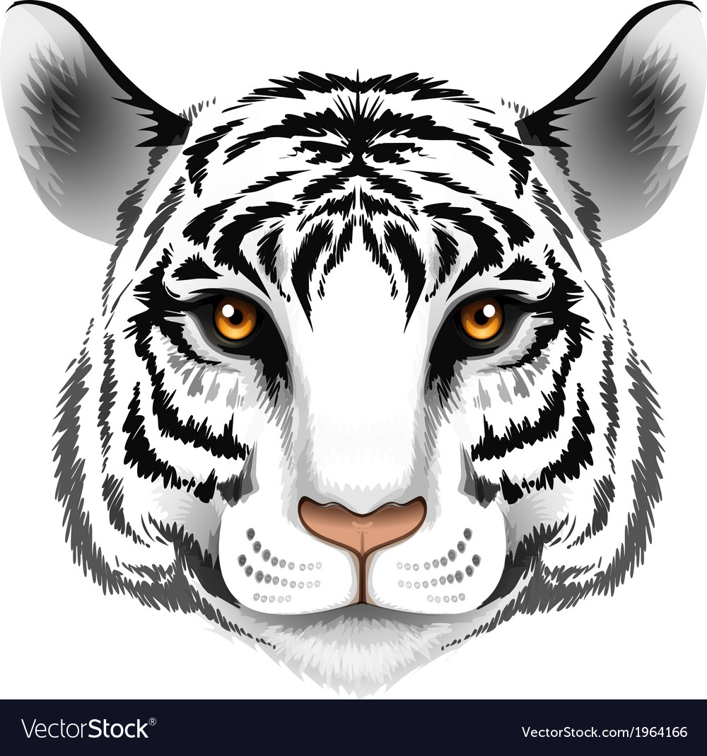 A head of a tiger vector | Price: 1 Credit (USD $1)
