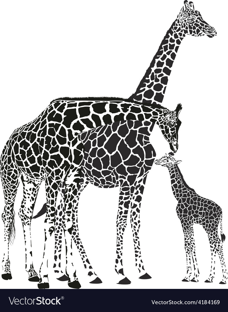 Adult giraffes and baby giraffe vector | Price: 1 Credit (USD $1)