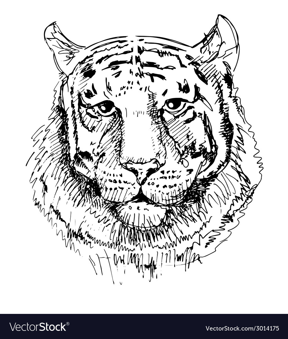 Artwork tiger sketch black and white drawing vector | Price: 1 Credit (USD $1)