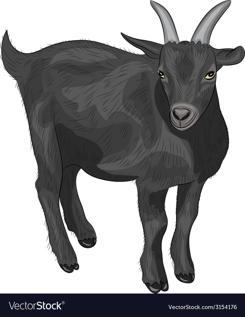 Black goat vector | Price: 1 Credit (USD $1)