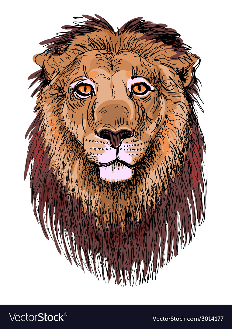 Artwork lion sketch drawing of head animals vector | Price: 1 Credit (USD $1)