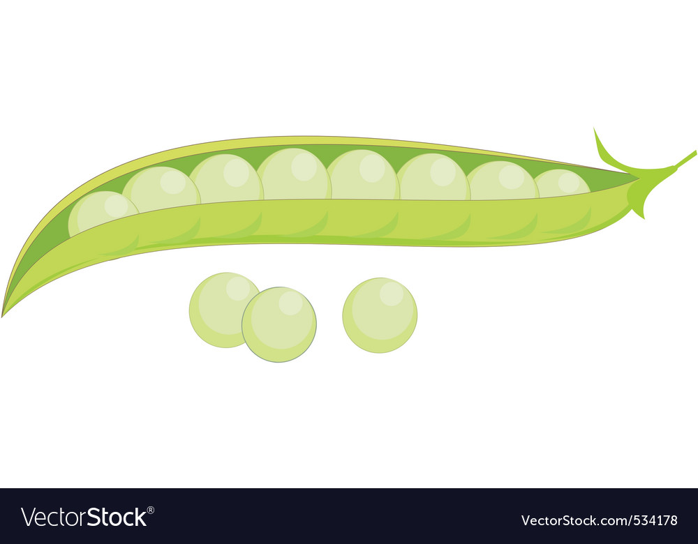 Green peas vector | Price: 1 Credit (USD $1)