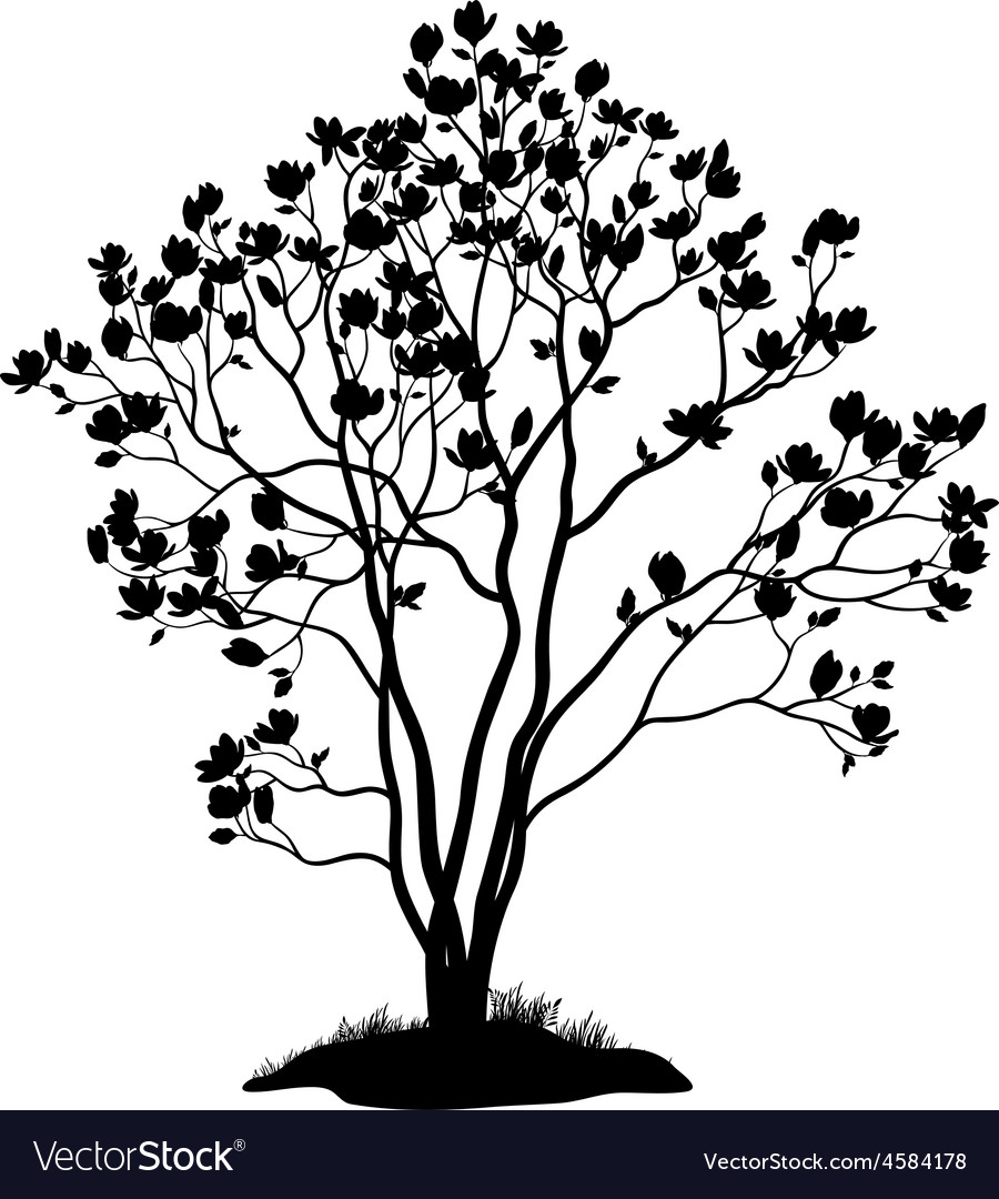 Magnolia tree with flowers and grass silhouette vector   Price: 1 Credit (USD $1)