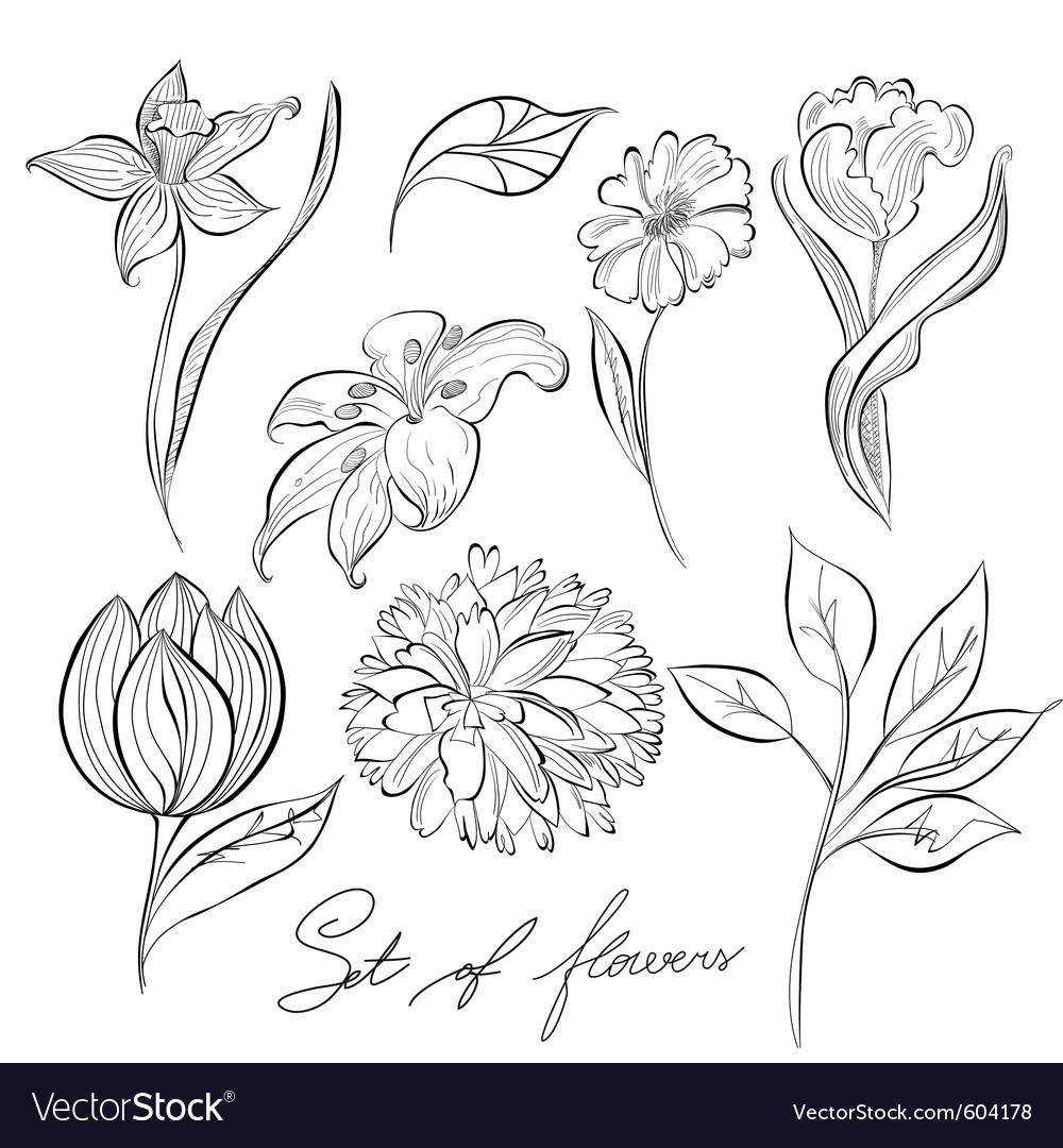 Sketch of flowers vector | Price: 1 Credit (USD $1)