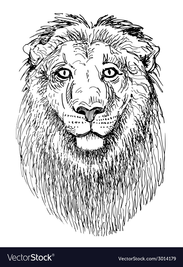 Artwork lion sketch black and white drawing of vector | Price: 1 Credit (USD $1)