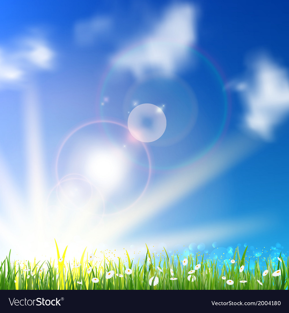Field of daisy flowers vector | Price: 1 Credit (USD $1)