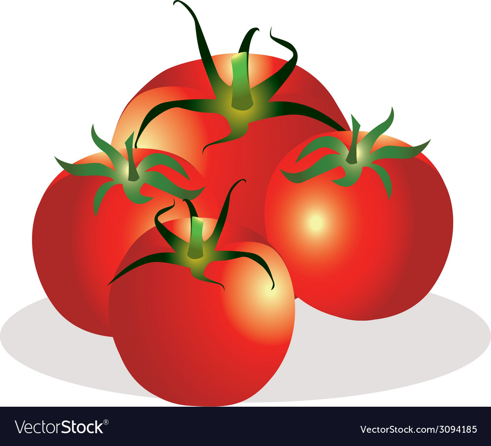 Tomatoes group vector | Price: 1 Credit (USD $1)