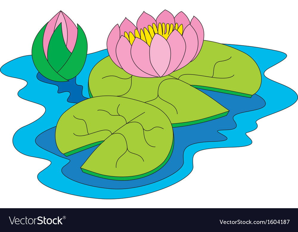 Water lily vector | Price: 1 Credit (USD $1)