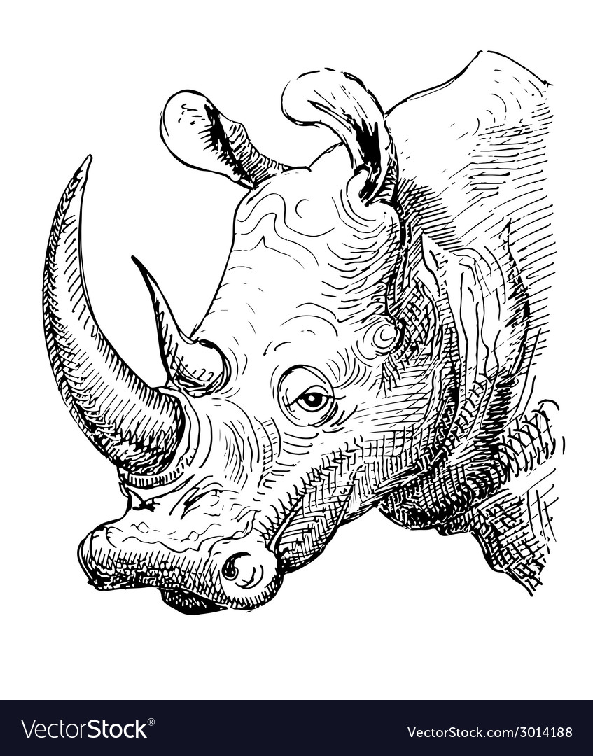 Artwork rhinoceros sketch black and white drawing vector | Price: 1 Credit (USD $1)