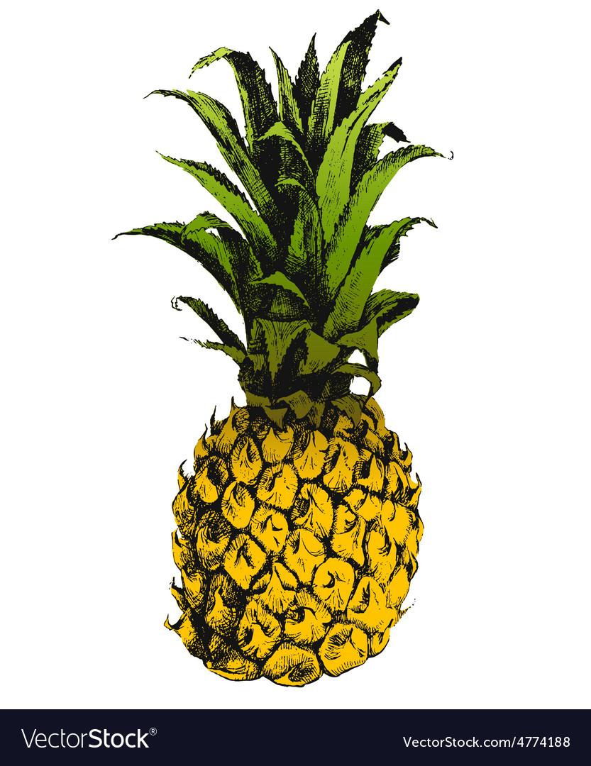Hand drawn pineapple vector | Price: 1 Credit (USD $1)