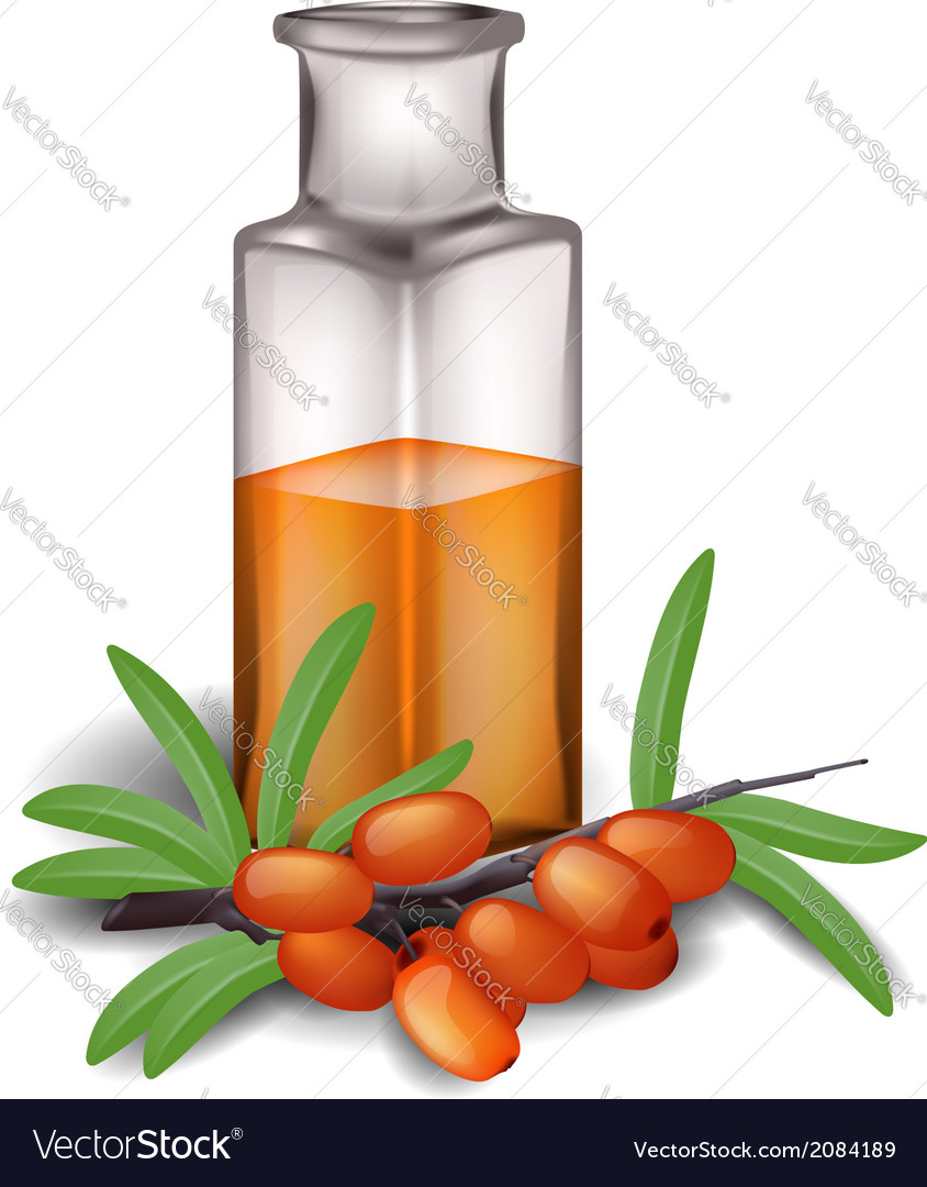 Sea buckthorn branch with berries and bottle of oi vector | Price: 1 Credit (USD $1)