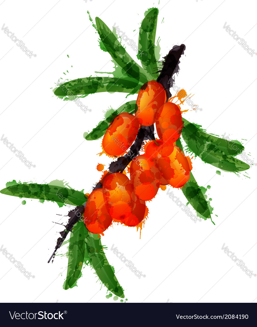 Sea buck thorn made of colorful splashes vector | Price: 1 Credit (USD $1)
