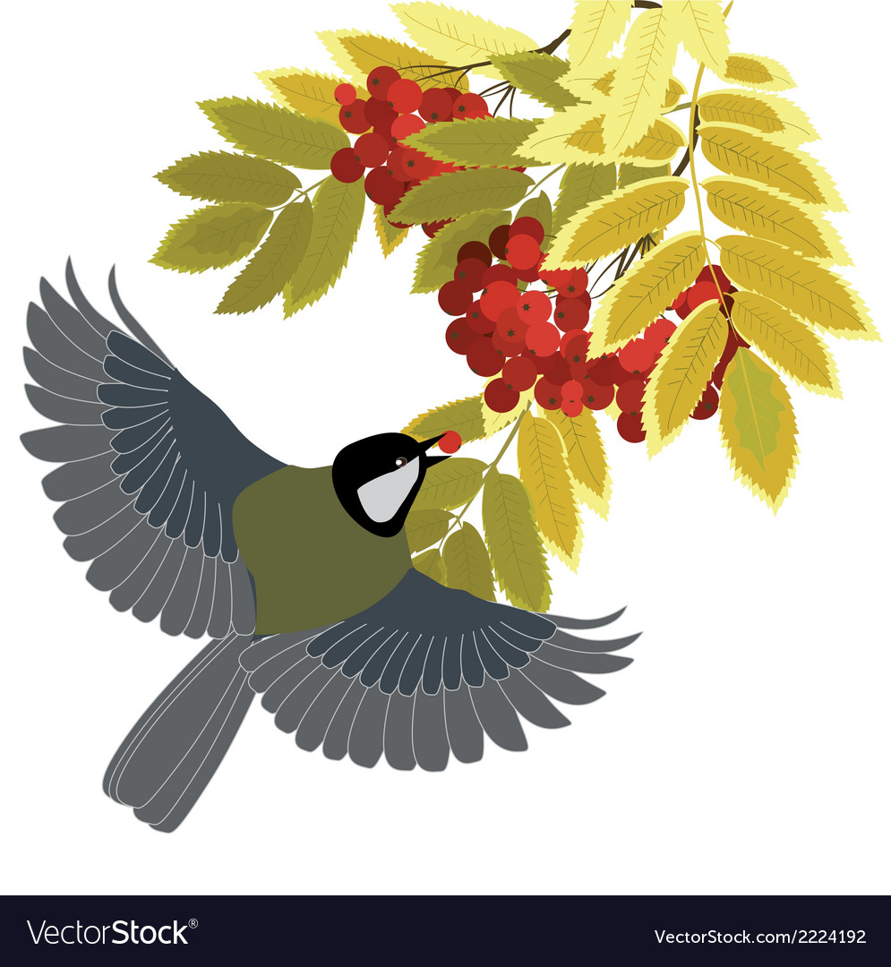 Rowan and tit vector | Price: 1 Credit (USD $1)