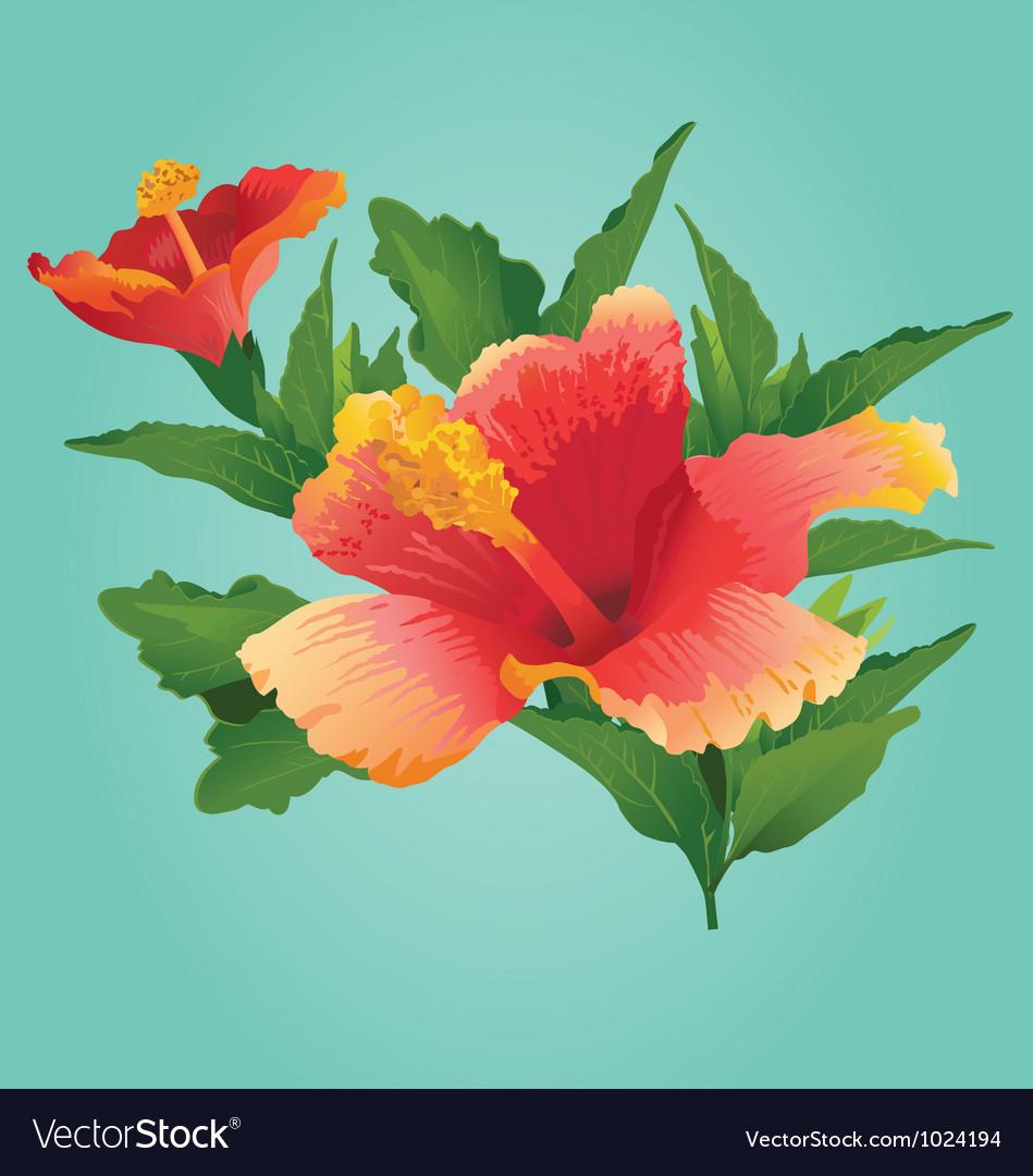 Sunset hibiscus - vector | Price: 1 Credit (USD $1)
