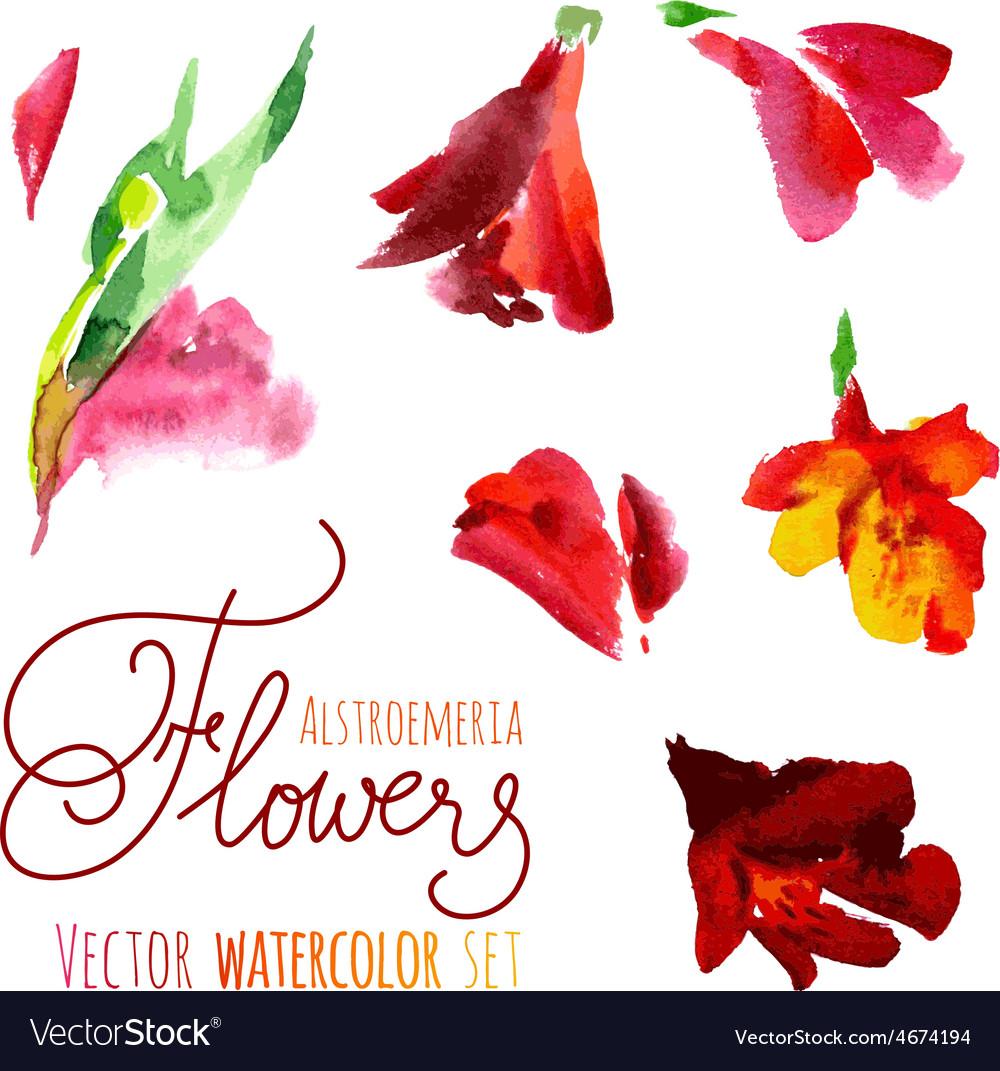 Watercolor flowers vector | Price: 1 Credit (USD $1)