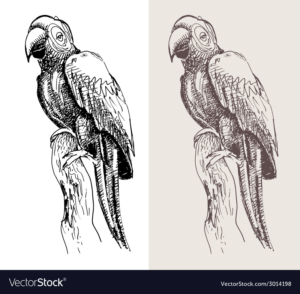 Original artwork parrot black sketch drawing bird vector | Price: 1 Credit (USD $1)
