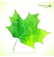 Watercolor green maple leaf vector