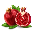 Pomegranate isolated poster or emblem vector