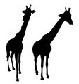 Silhouette of giraffe vector