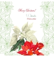 Background with bouquet of christmas poinsettia vector
