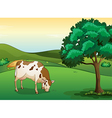 A cow eating grass vector