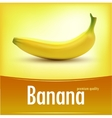 Sweet fresh yellow bananas vector