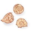 Sea seashells vector