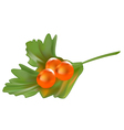 Red caviar on a piece of parsley vector