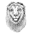 Artwork lion sketch black and white drawing of vector