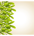 Green olive background vector