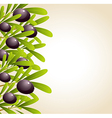 Green olive branches and black olives vector