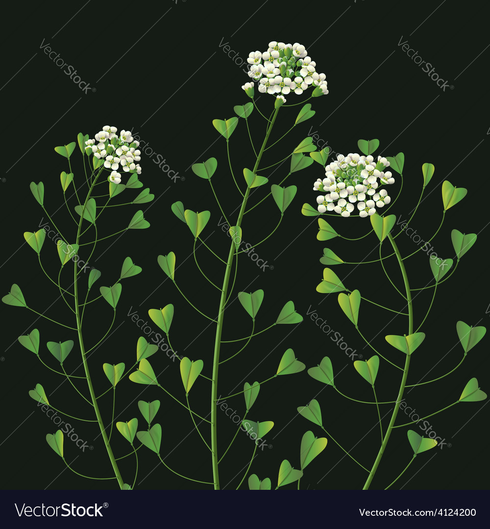 Weed flower vector | Price: 1 Credit (USD $1)