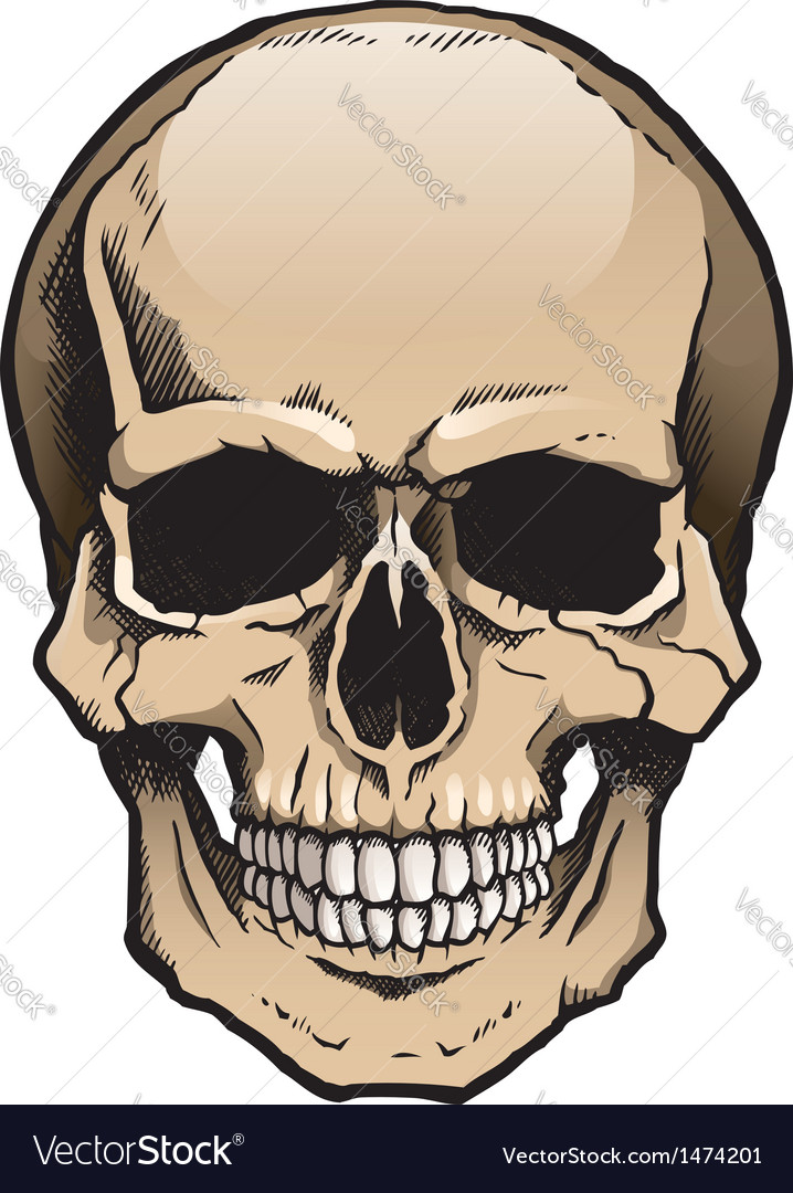 Colored human skull with jaw vector | Price: 3 Credit (USD $3)