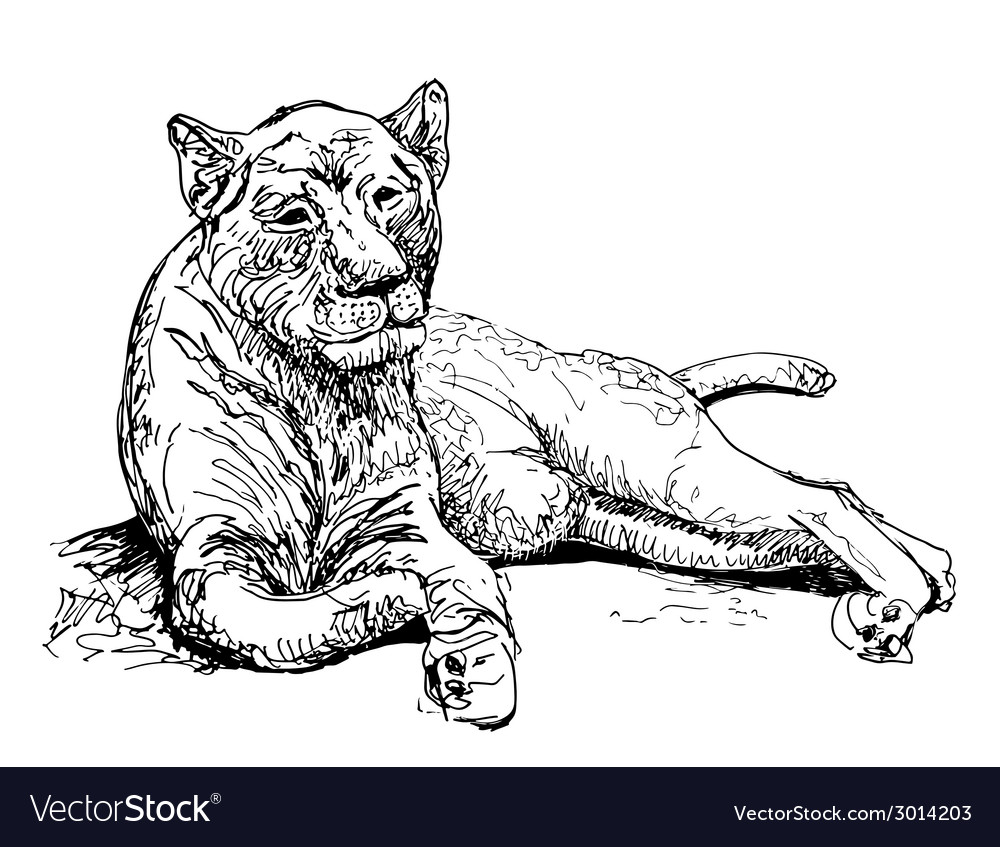 Original artwork old lioness black sketch drawing vector | Price: 1 Credit (USD $1)