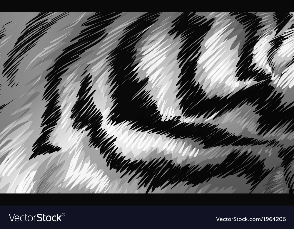 Tiger texture bw vector | Price: 1 Credit (USD $1)