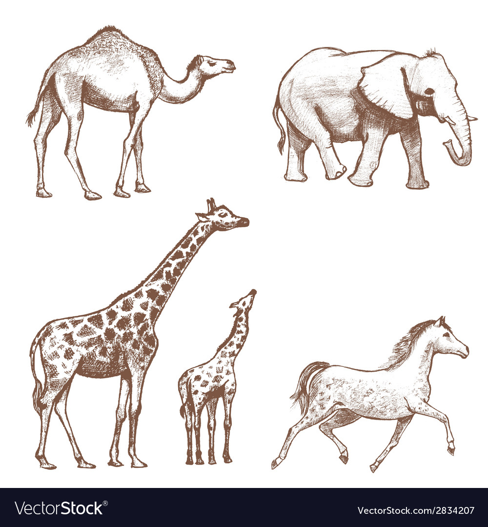 Collection of picture pencil with animals vector | Price: 1 Credit (USD $1)