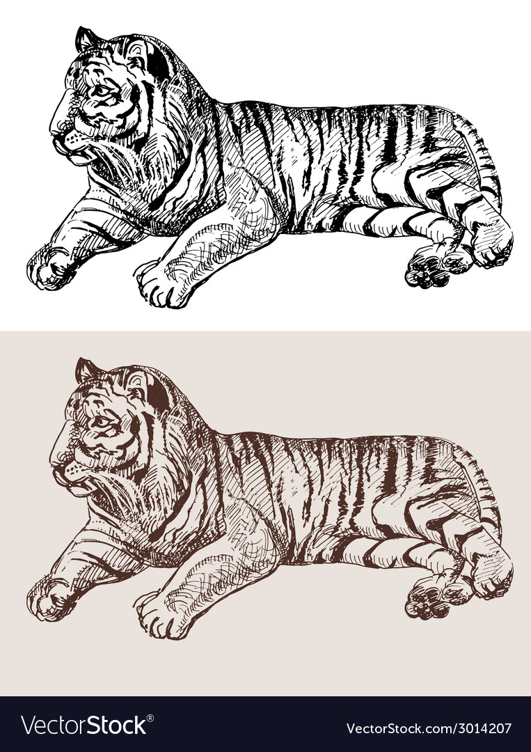 Original artwork tiger black sketch drawing animal vector | Price: 1 Credit (USD $1)