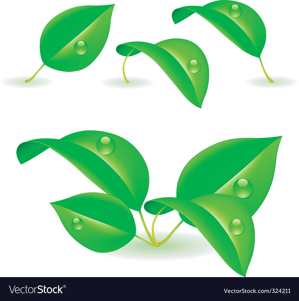 Green leaves vector | Price: 3 Credit (USD $3)