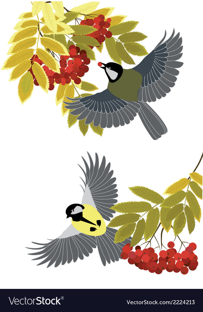 Rowan and tits vector | Price: 1 Credit (USD $1)