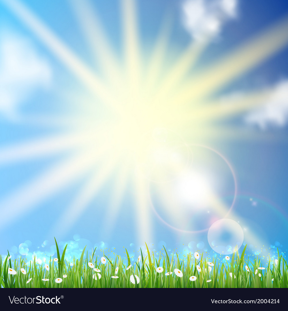 Daisy field and sunset sky vector | Price: 1 Credit (USD $1)