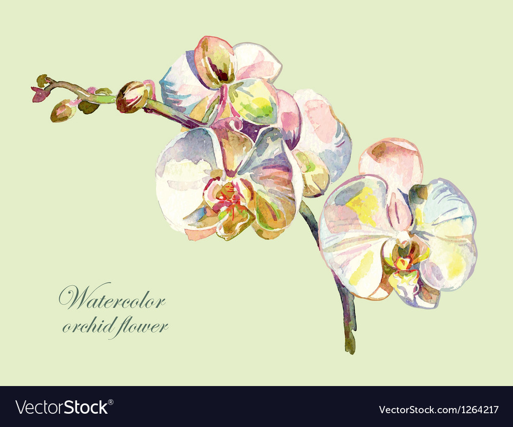 Ornate watercolor orchid flower vector