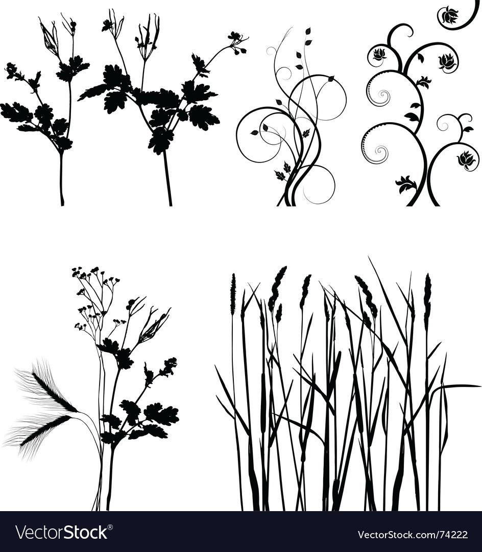 Plants vector | Price: 1 Credit (USD $1)