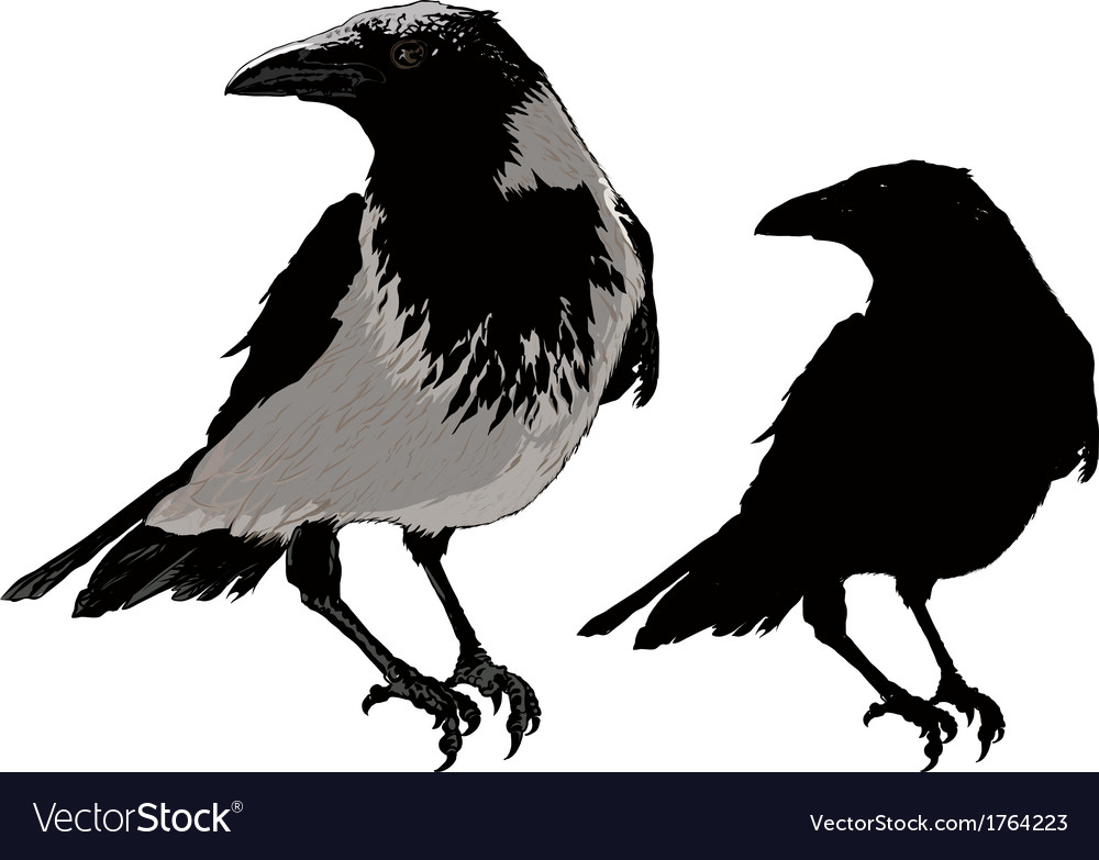 Black crows vector | Price: 1 Credit (USD $1)
